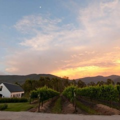 Newstead Wine Estate
