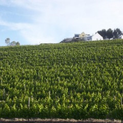 Plettenvale Wine Estate